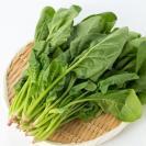 筋が気になる…。葉物野菜の調理の方法を管理栄養士がアドバイス!
