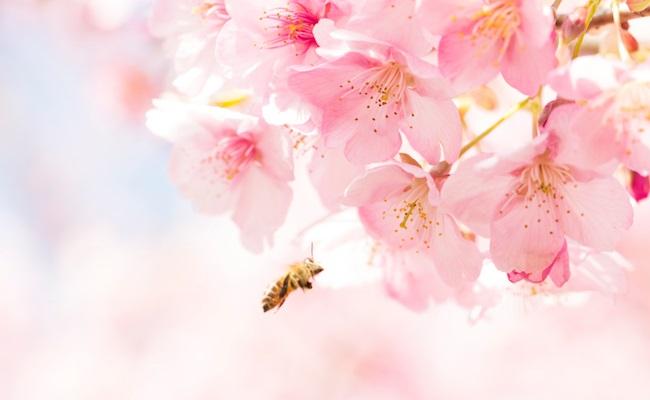 お花見のイメージ
