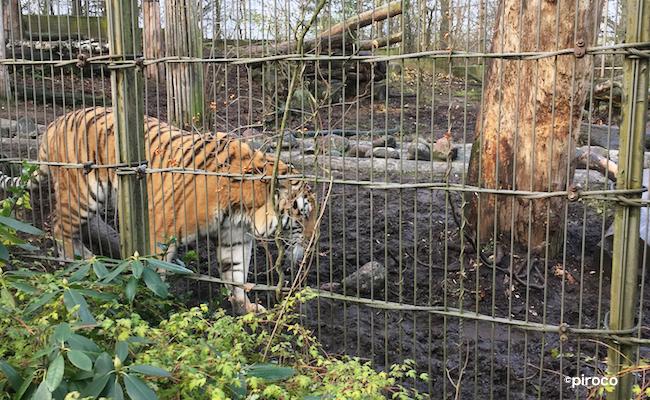 フィンランドの動物園その2