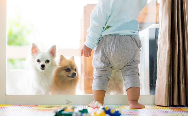 赤ちゃんとペットのイメージ