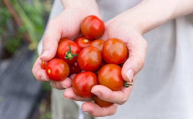 栄養豊富なトマトの離乳食レシピ