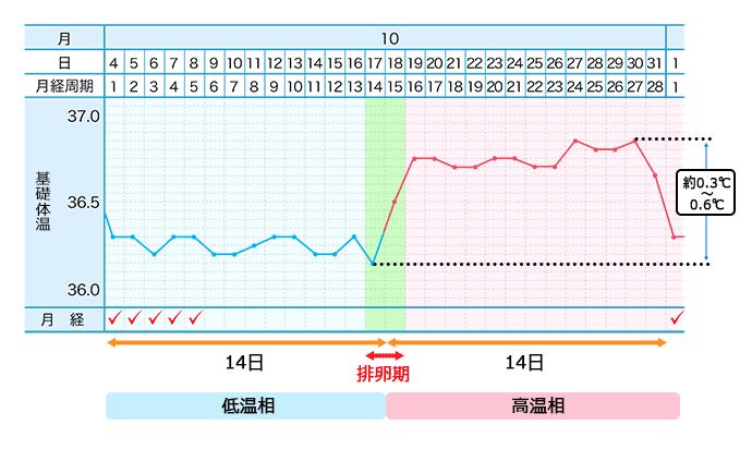 基礎体温表のイメージ2