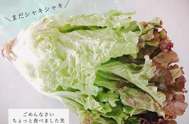 野菜の鮮度が保たれている様子