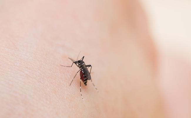 虫刺されの予防と対処法のイメージ
