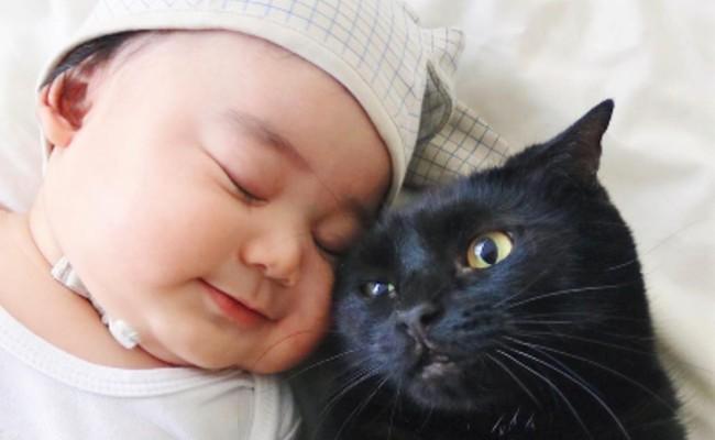 生後9カ月の赤ちゃん・凪くんと猫のギネス(4歳)・ピムス(3歳)