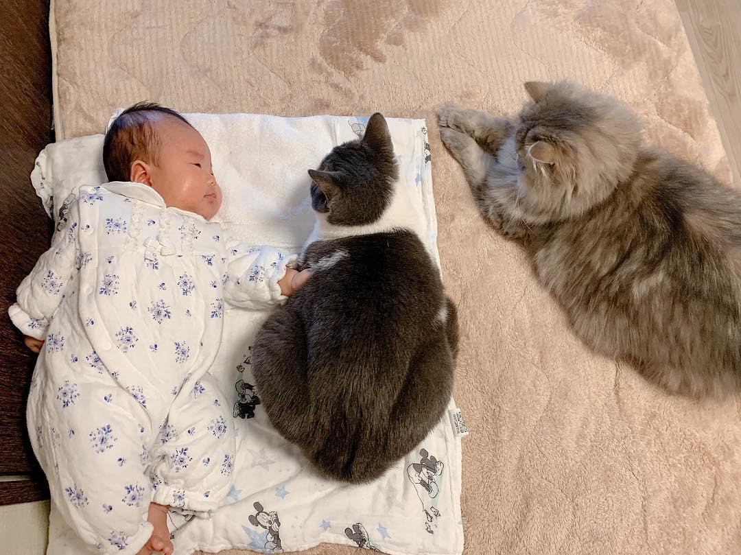 生後9カ月の赤ちゃん・猫のとろろ(♀)・ごま(♂)