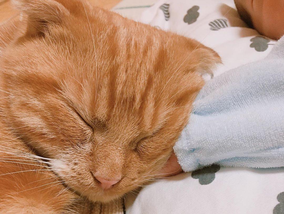 生後7カ月の赤ちゃんと猫の菊丸(♂)