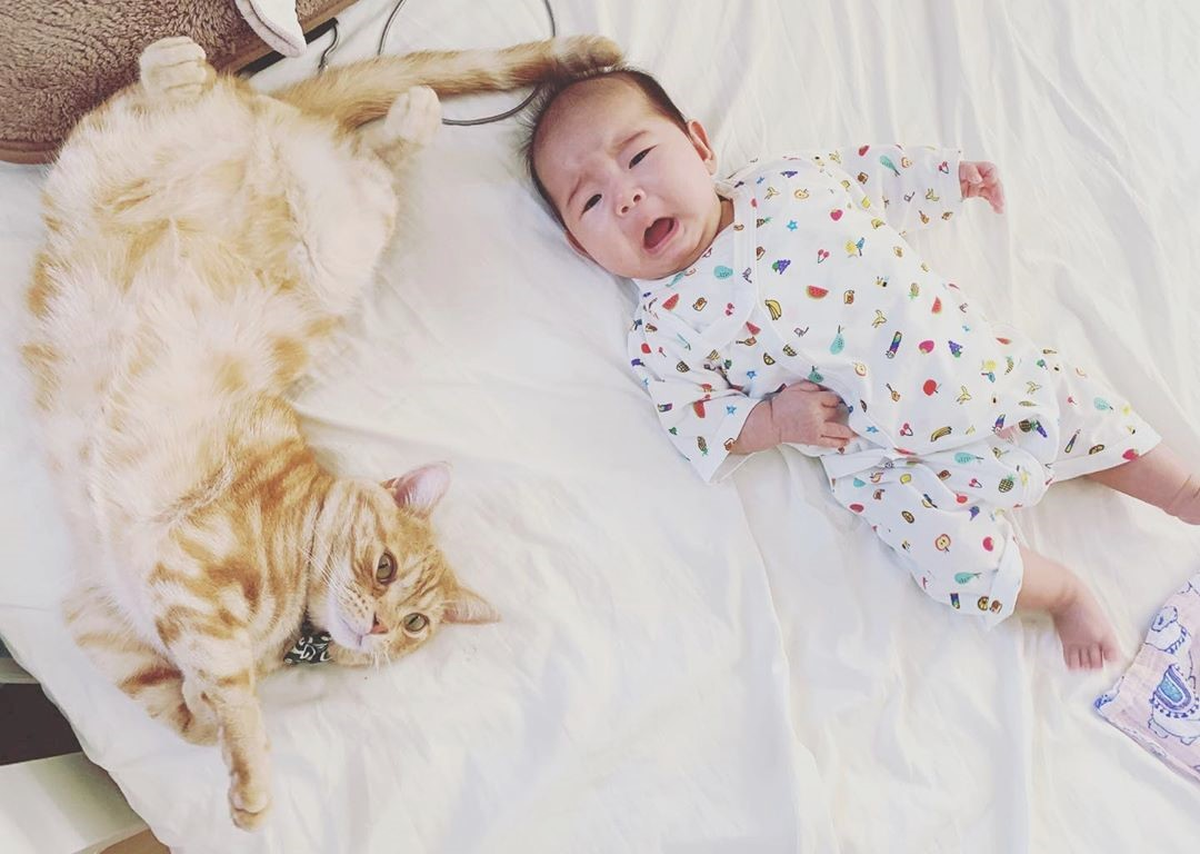 令和生まれの赤ちゃんとアメリカンショートヘアのミル(♂)