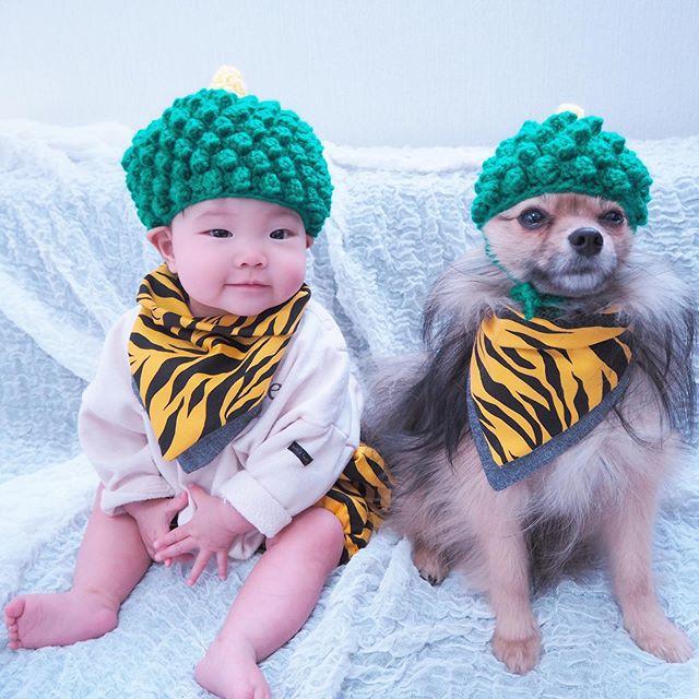 赤ちゃんとポメの兄妹リンクコーデ