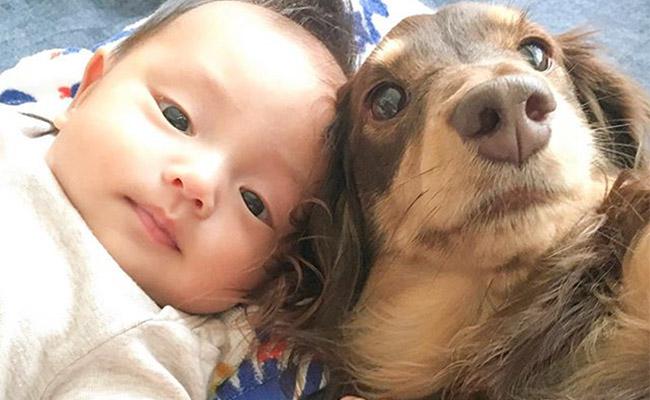 ダックスフントと赤ちゃん