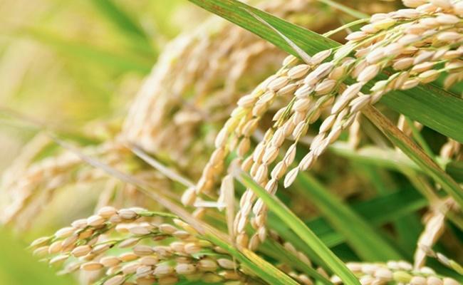 食べてきれいになりたい!プチ玄米生活を始めて実感した3つのこと【体験談】top