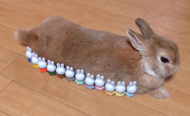 ミッフィーとウサギちゃん