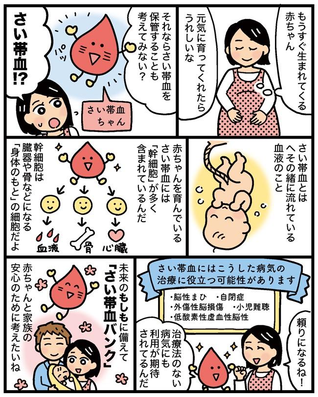 さい帯血の説明