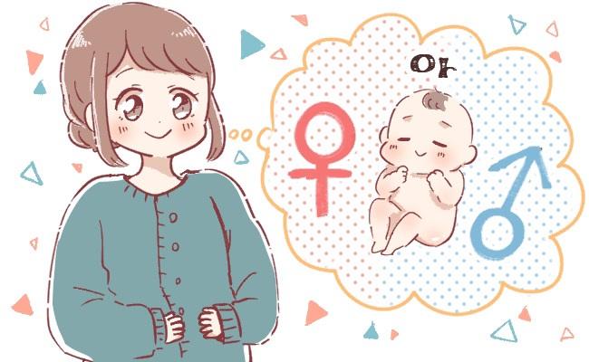 お腹の中の赤ちゃんの性別がわかる?